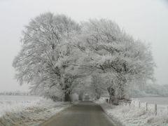 Ice-bound trees